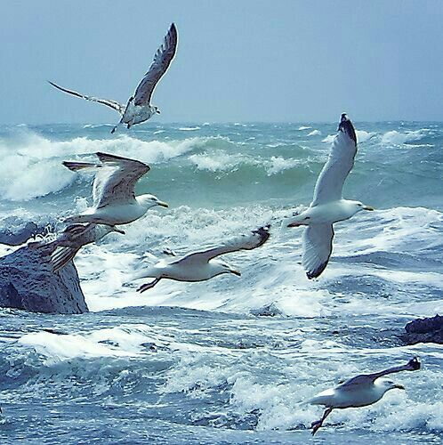 seagulls over water pinterest